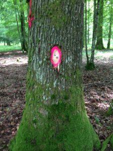 arbre marqué